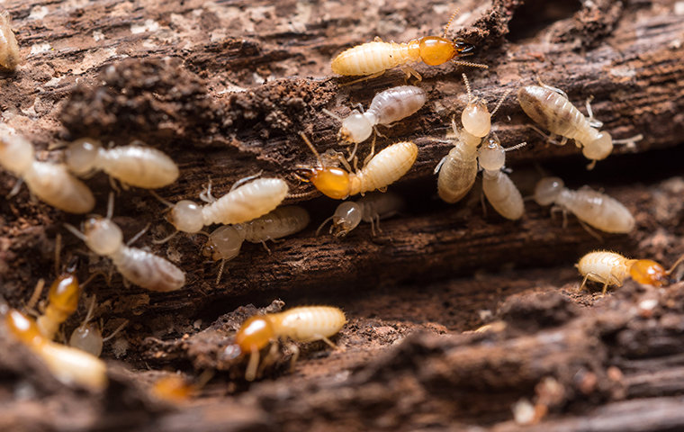 Signs of having termites