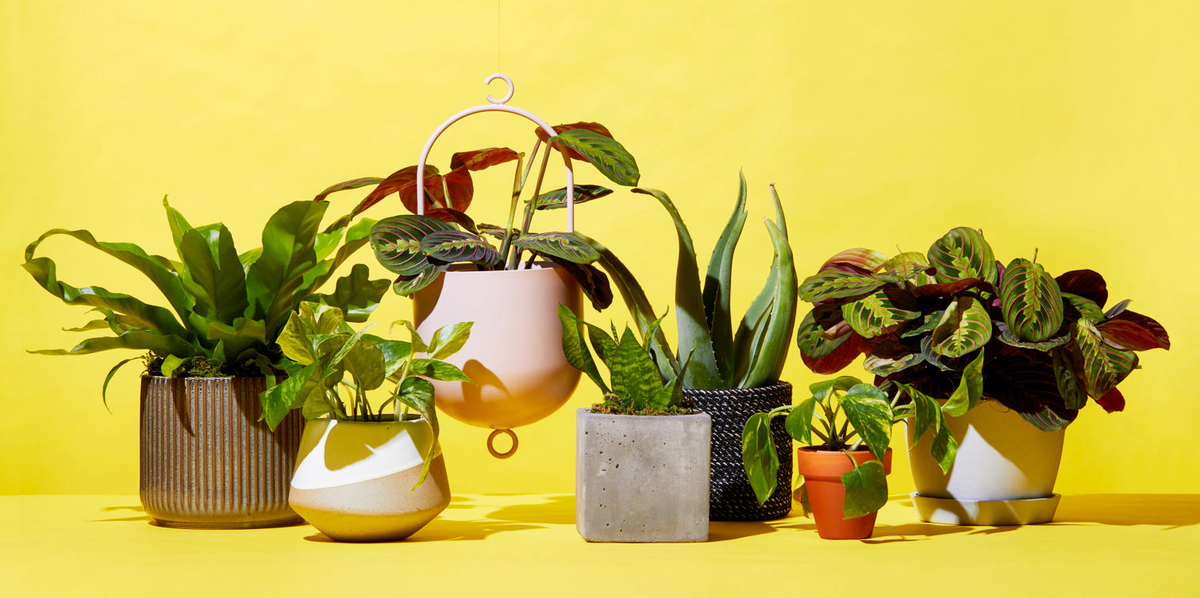 Enhance Up Your Home with Indoor Plants